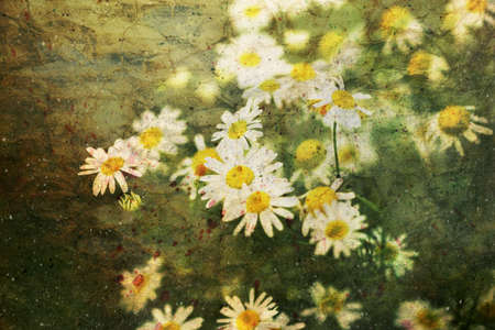 cute small chamomile flowers and watercolor splashes