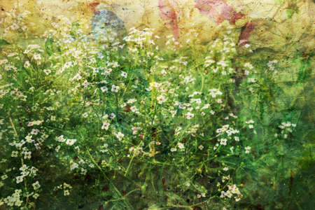 artwork with small white flowers and watercolor splashes