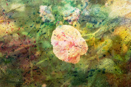 artwork with pink rose and watercolor spatter