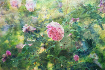 blooming pink roses and watercolor splashes