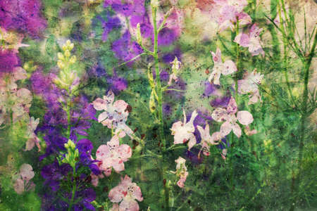 purple and pink delphinium flowers and watercolor splashes Standard-Bild