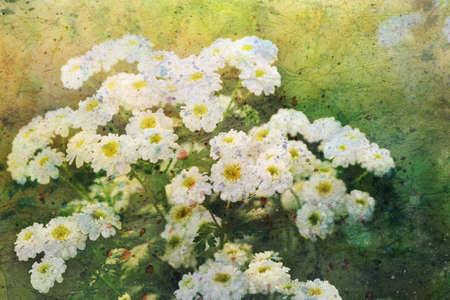 artwork with chamomile flowers Standard-Bild
