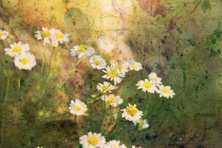 artwork with beautiful chamomiles and watercolor splashes Standard-Bild