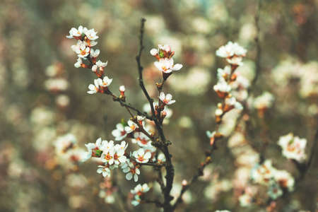 cute flowering twigs