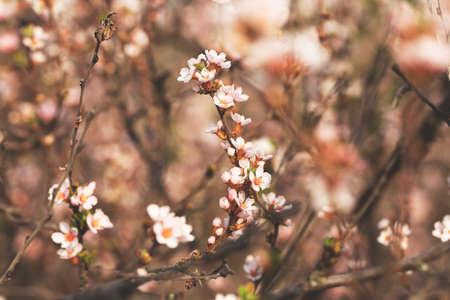 flowering twigs Standard-Bild
