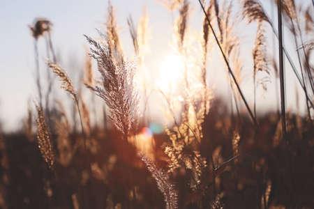 canne: canne al tramonto Archivio Fotografico