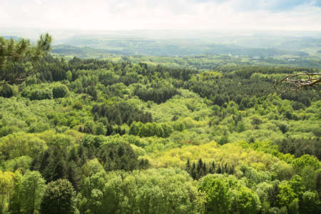 view of a forest, pleasant landscape Standard-Bild