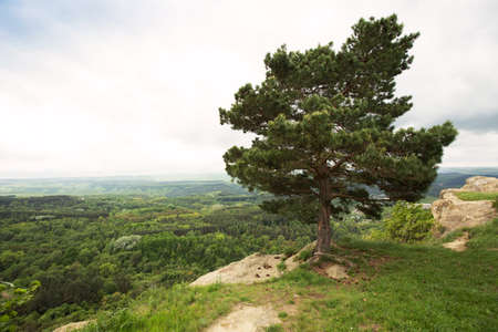 pine-tree on a cliff edge
