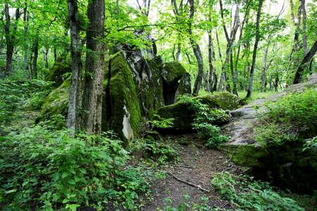 arboleda: Forest Grove