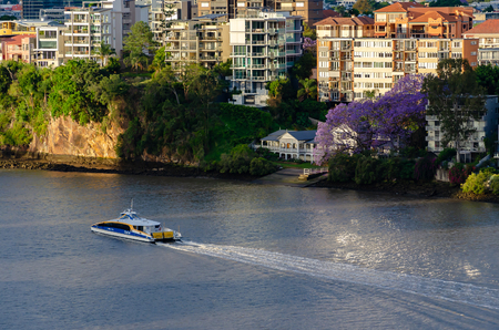 Brisbane in full bloom with jacaranda trees as a City Cat ferry sails past houses and apartments Sajtókép