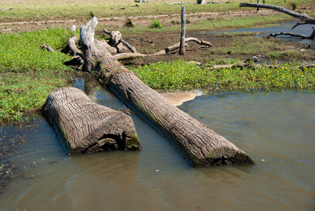 Sunken logs in a drought stricken reservoir Фото со стока