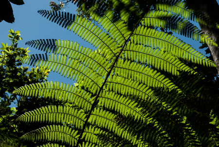 A fern in a small clearing in a tropical forect is lit up by the sun, the shadows have reminders of New Zealands silver fern flags