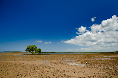 Low tide on a Queensland beach reveals mud flats and a lone tree Stock fotó