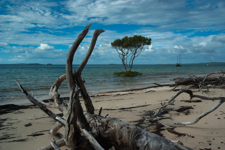 A lone tree sits just offshore in the sea with yachts anchored in the bay and driftwood on the beach