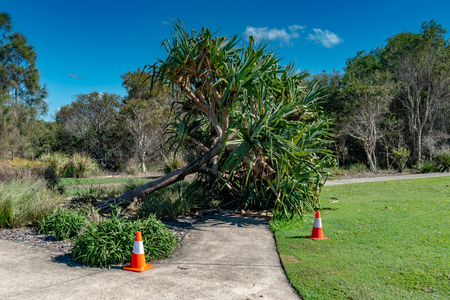 A tree which has fallen over a footpath causes a potential safety problem for pedestrians Stock fotó