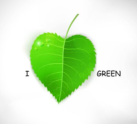 heart shaped leaves: I love green. Fresh realistic vector leaf isolated on white. Illustration