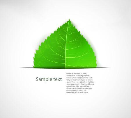 Green leaf background Ecology vector label. Stock Vector - 15442119