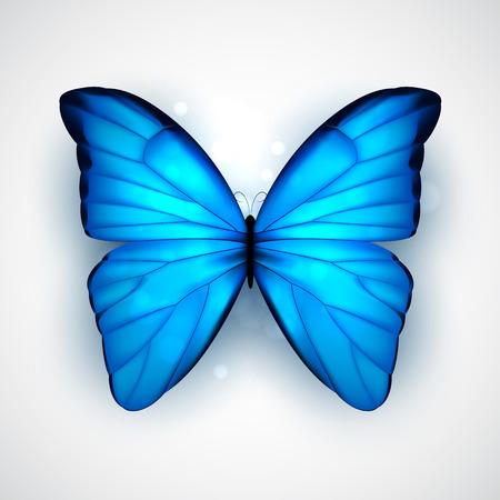 mariposa azul: Mariposa con grandes alas de color azul sobre fondo blanco. Vector EPS10.
