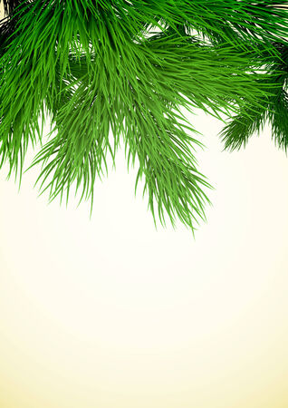 pine boughs: Christmas background with a fir tree branch in the top part. Illustration