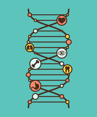 dna strands: Symbolic DNA sign with simple organ icons in the nods. Vector illustration.