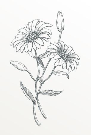 Ręcznie rysowane kwiat sztuki linii. Wektor rysunek dwóch stokrotek