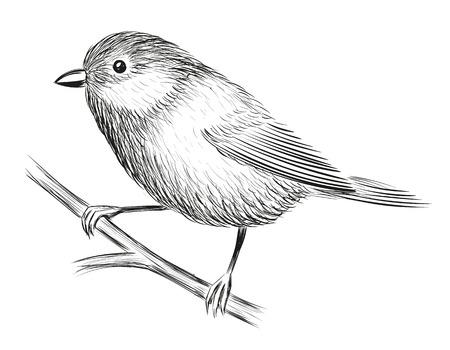 Cute Little Bird isolated on plain background. Illustration