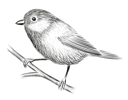 Cute Little Bird isolated on plain background. Stock Illustratie
