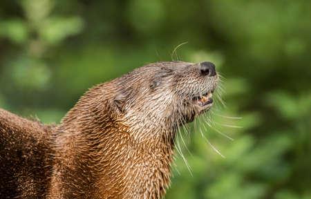 otter: Otter waking up