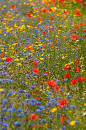 abi: wildflower meadow
