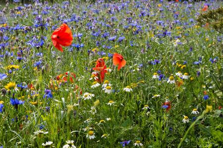 abi: A wildflower meadow