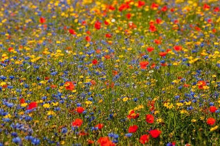 野生の花の草原 写真素材