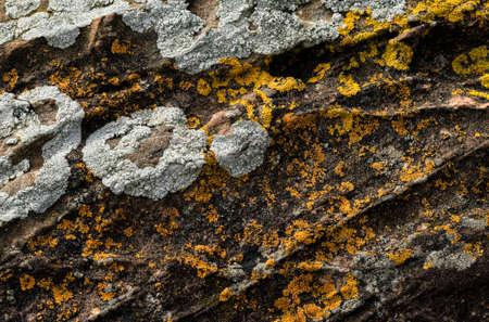 mould: Mould growing on concrete