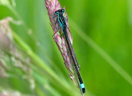 damselfly: Damselfly on grass