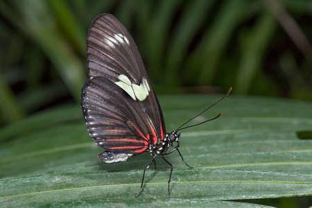 longing: Doris Longing butterfly