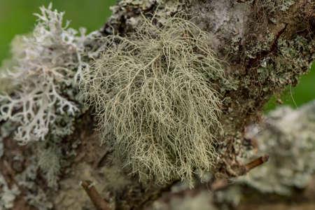 lichen: Lichen macro