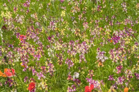 abi: A wildflower meadow in Scotland