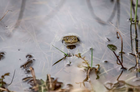 Frog poking its head out of the water