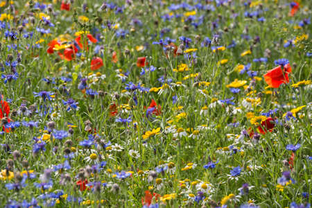 A wildflower meadow in in the Summer time