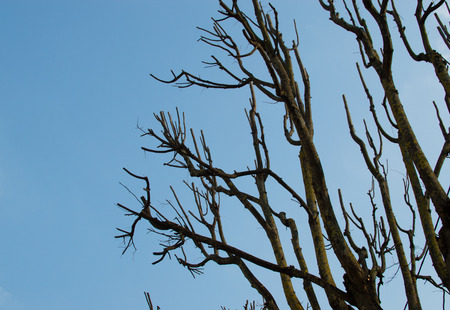 brute: Branches and clear sky. Natural colors