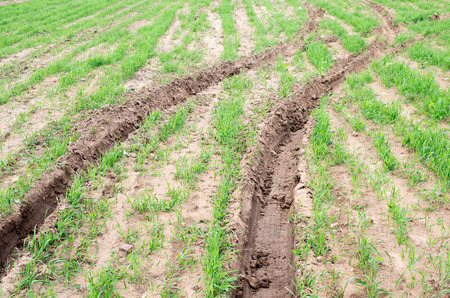 cultivated land: Tractor tracks on green cultivated land. Diagonal route Stock Photo
