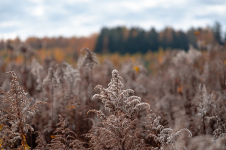 Autumn withered bushes and forest on background. Brown colors 스톡 콘텐츠