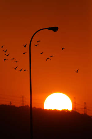 homing: sunset and homing birds Stock Photo