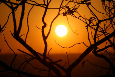 silhoutted: Golden sunset and silhoutted branches Stock Photo