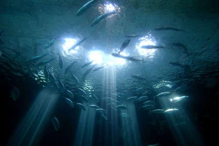 oceanarium: oceanarium