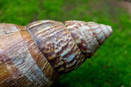 Closeup big snail on green grass Reklamní fotografie