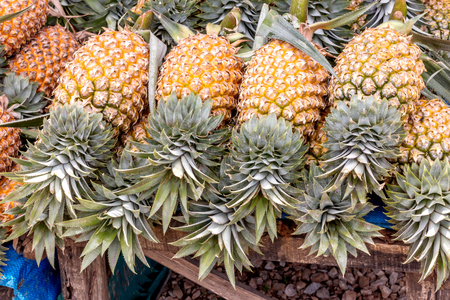Many pineapples are yellow, sweet and delicious Reklamní fotografie