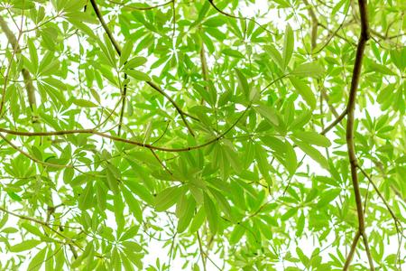 Green leaf on white background Reklamní fotografie