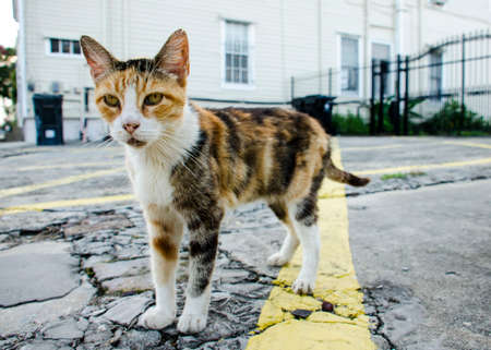 calico whiskers: Closeup of a Calico Stray Kitty on a Street