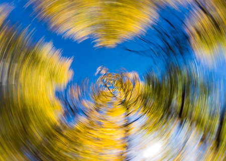 spin: Creative Spin Effect on Aspen Trees