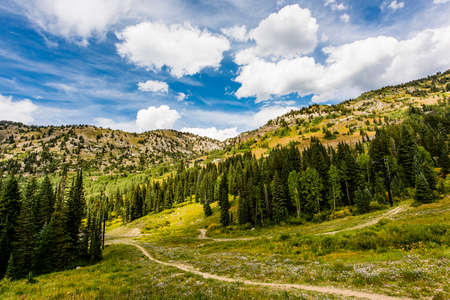 wasatch: Alpine Meadows at Albion Basin, Utah Stock Photo